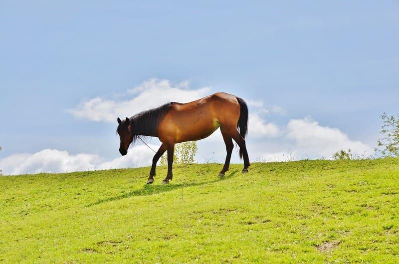 芝の上を歩く馬