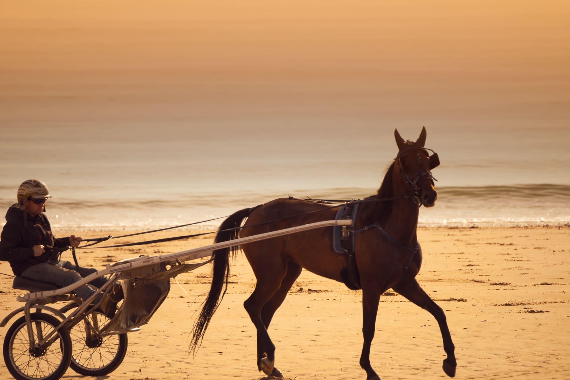 夏競馬を「つまらない」⇒「おもしろい」に変える2つの方法