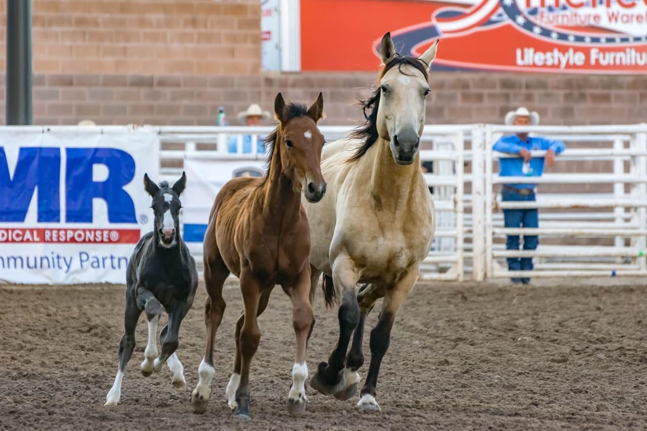 夏競馬を攻略するための3つの方法