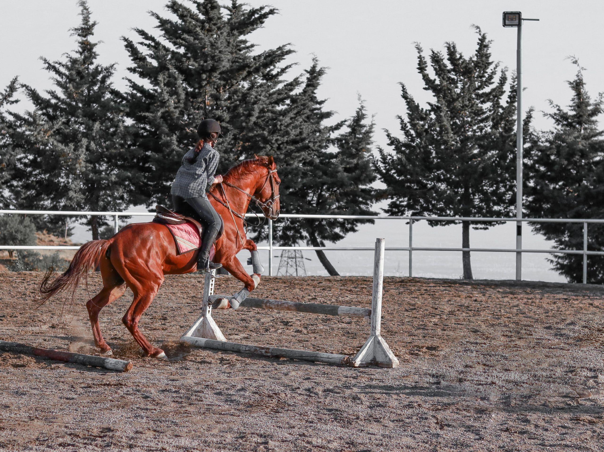 夏競馬で牝馬が活躍する3つの理由